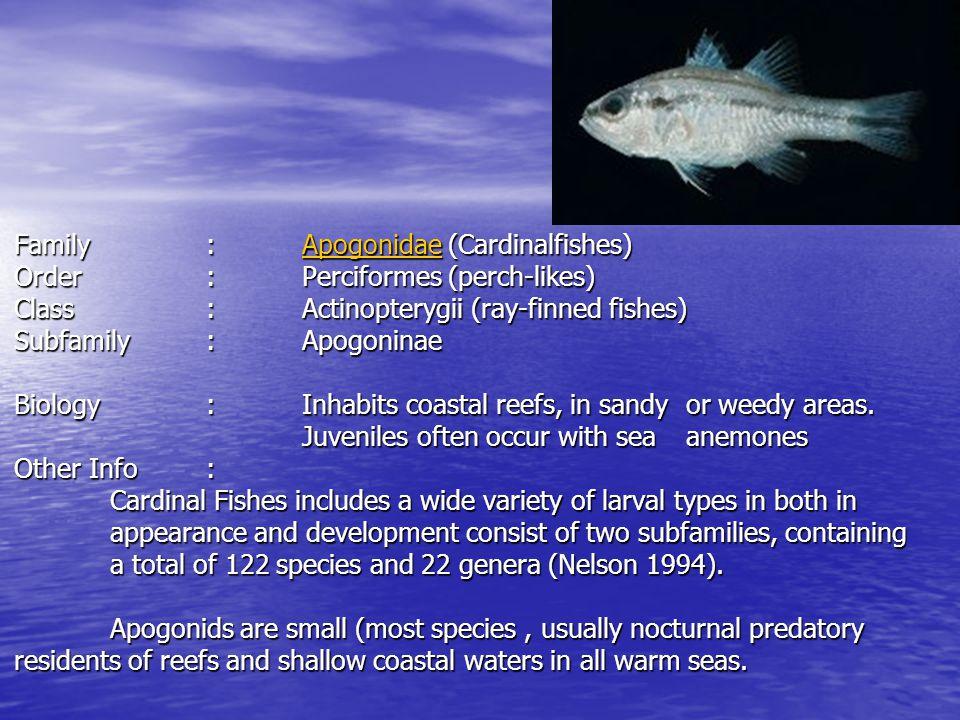 Family. :. Apogonidae (Cardinalfishes) Order. :