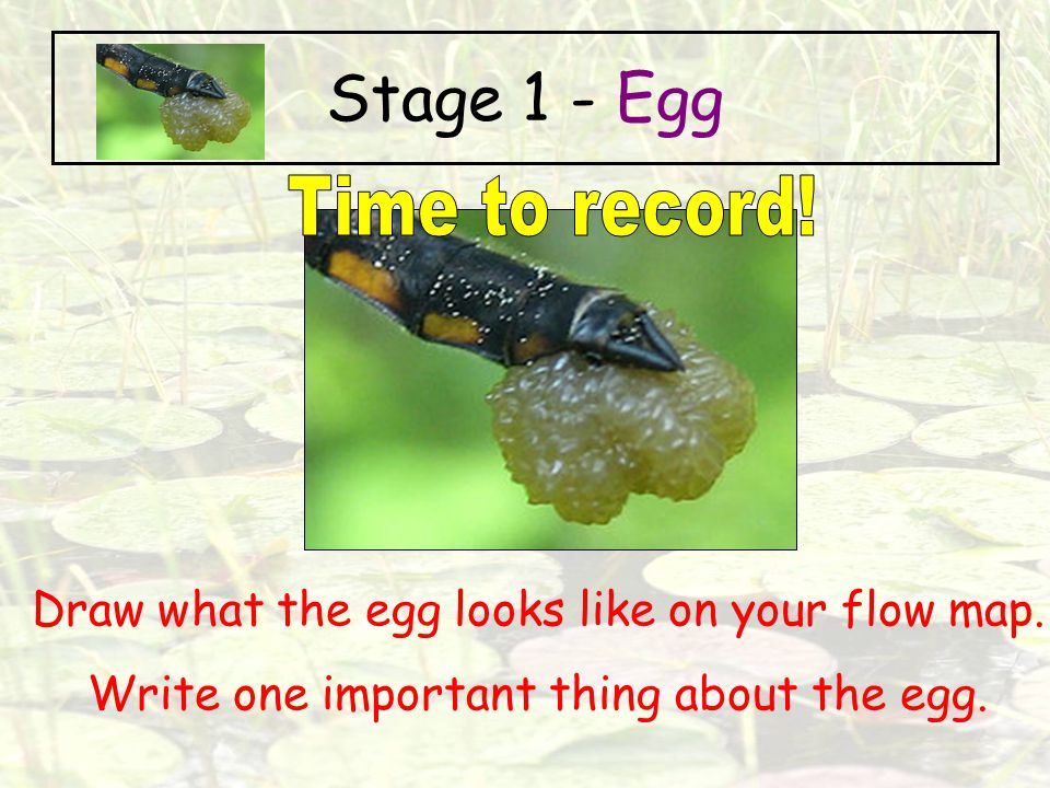 Stage 1 - Egg Time to record!