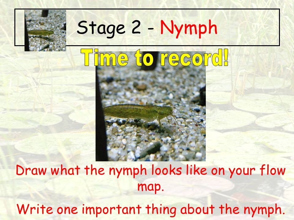 Stage 2 - Nymph Time to record!