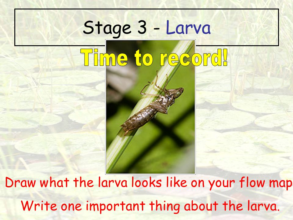 Stage 3 - Larva Time to record!
