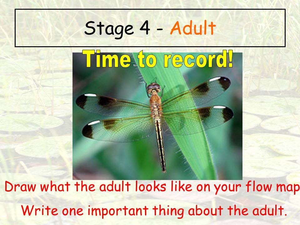 Stage 4 - Adult Time to record!