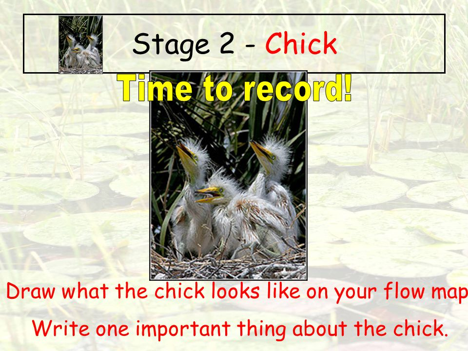 Stage 2 - Chick Time to record!