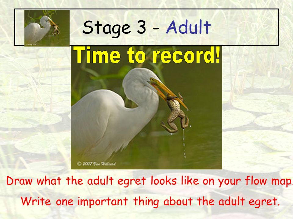 Stage 3 - Adult Time to record!