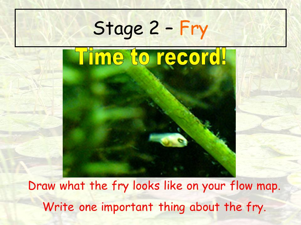Stage 2 – Fry Time to record!