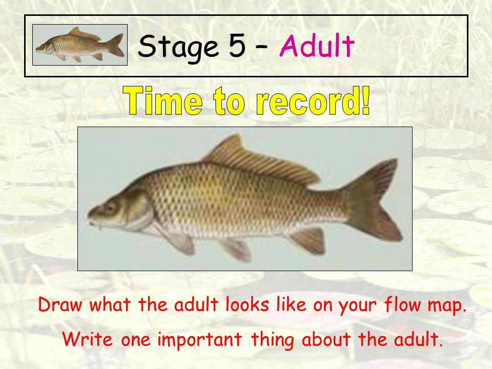 Stage 5 – Adult Time to record!