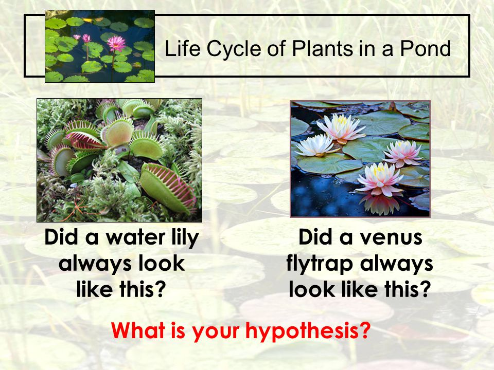 Life Cycle of Plants in a Pond