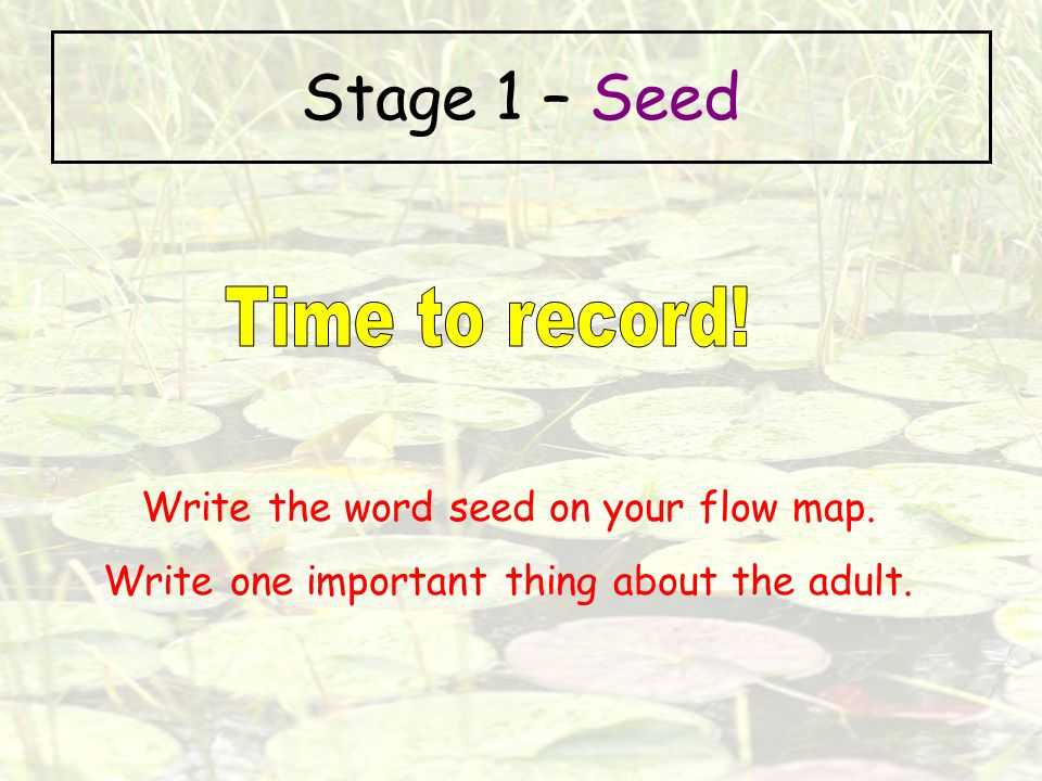Stage 1 – Seed Time to record! Write the word seed on your flow map.