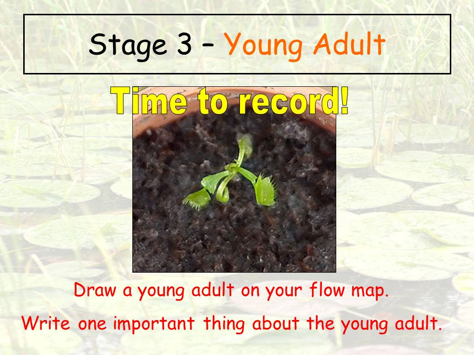 Stage 3 – Young Adult Time to record!