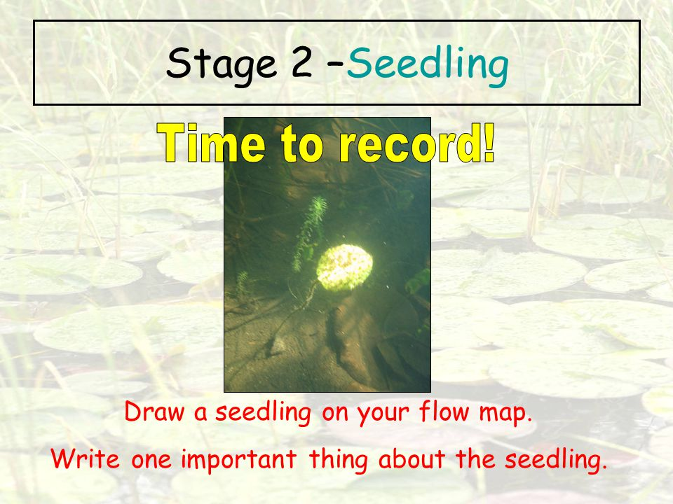 Stage 2 –Seedling Time to record! Draw a seedling on your flow map.