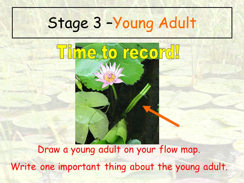 Stage 3 –Young Adult Time to record!