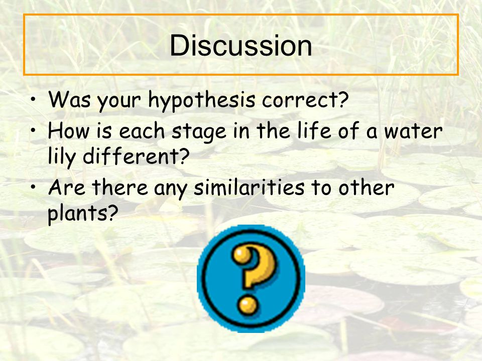 Discussion Was your hypothesis correct