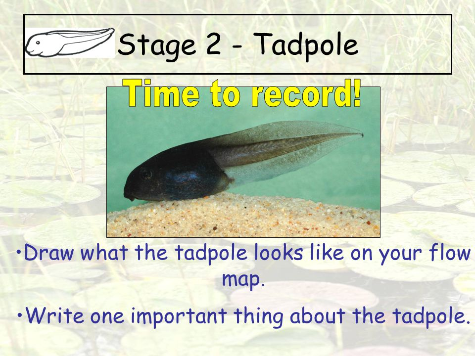 Stage 2 - Tadpole Time to record!