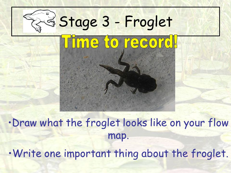 Stage 3 - Froglet Time to record!