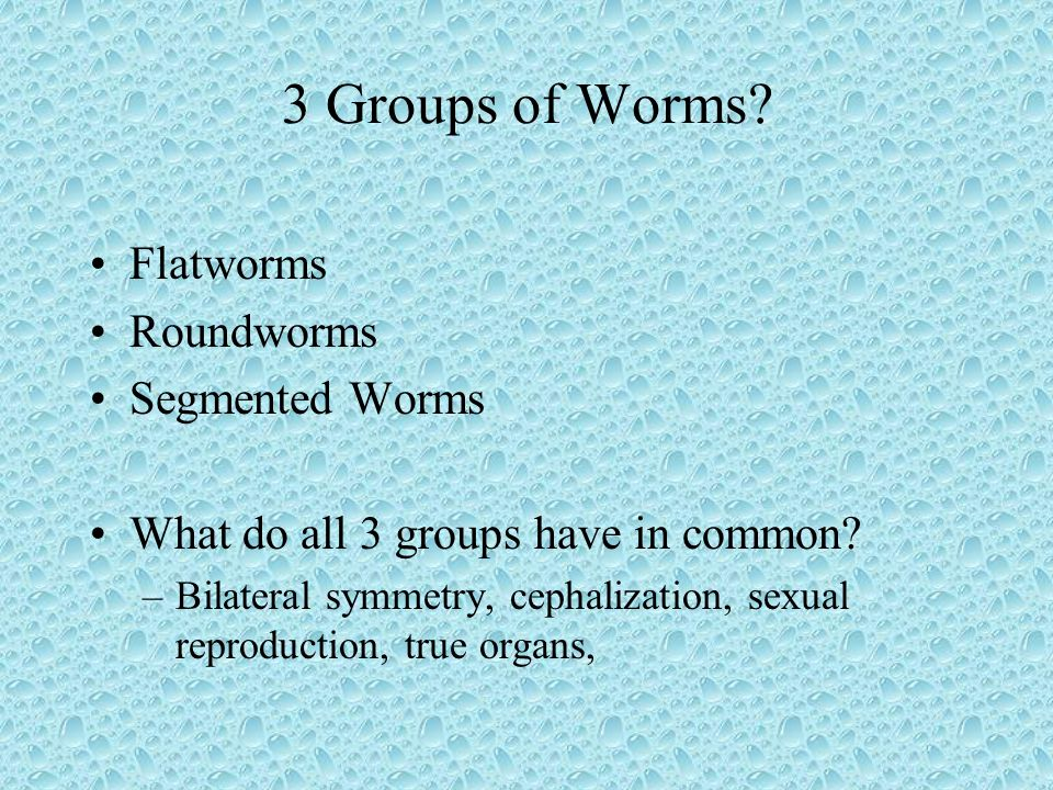 3 Groups of Worms Flatworms Roundworms Segmented Worms