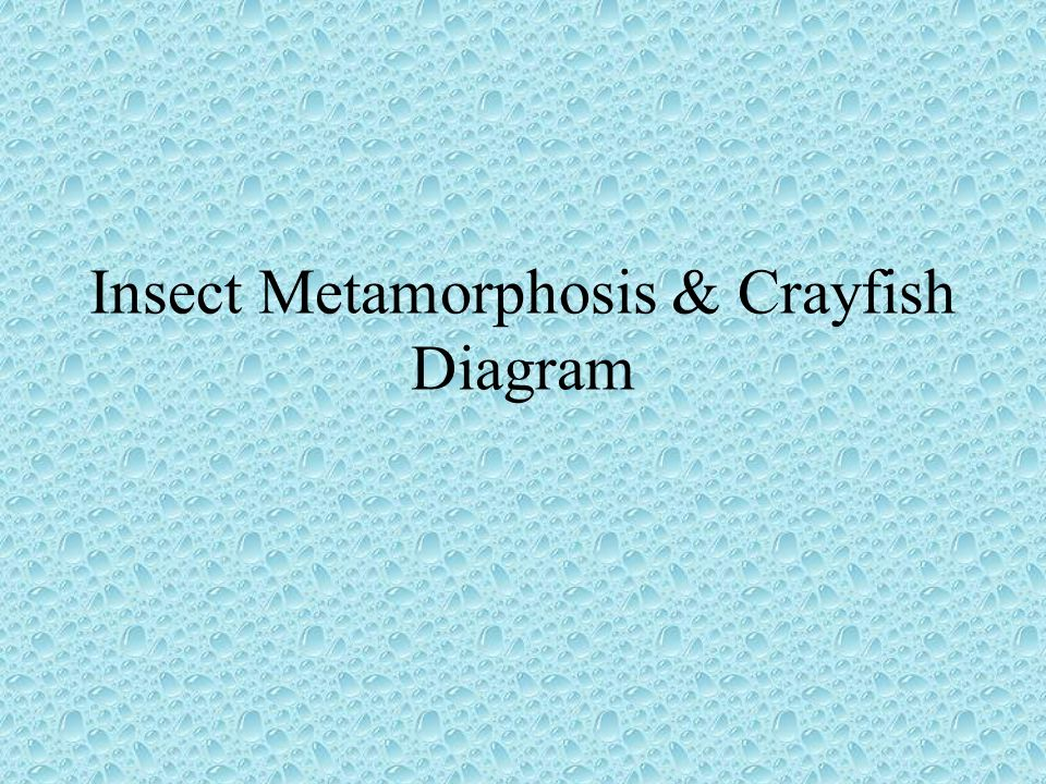 Insect Metamorphosis & Crayfish Diagram