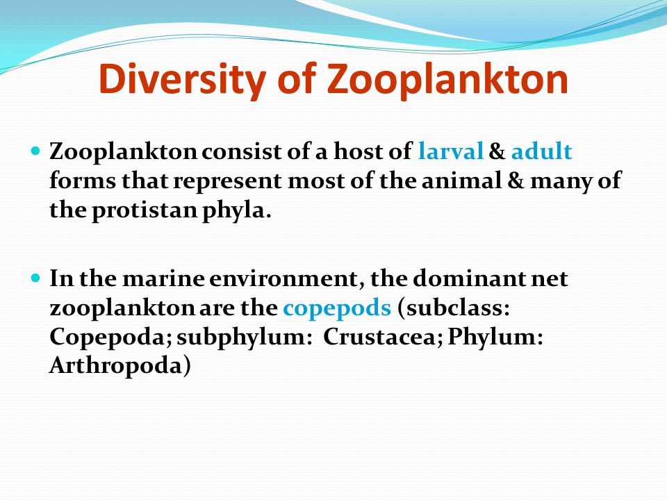 Diversity of Zooplankton
