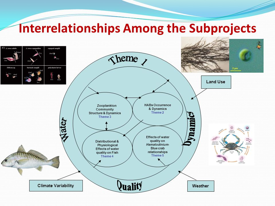 Interrelationships Among the Subprojects
