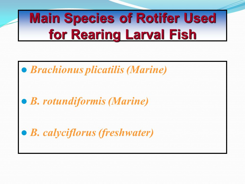 Main Species of Rotifer Used for Rearing Larval Fish