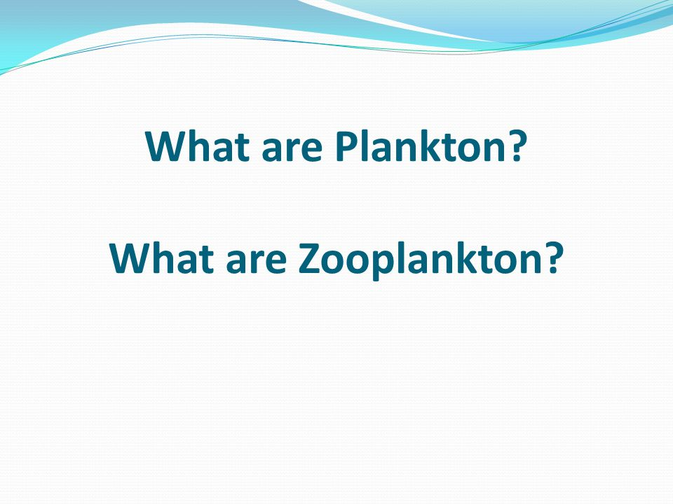 What are Plankton What are Zooplankton