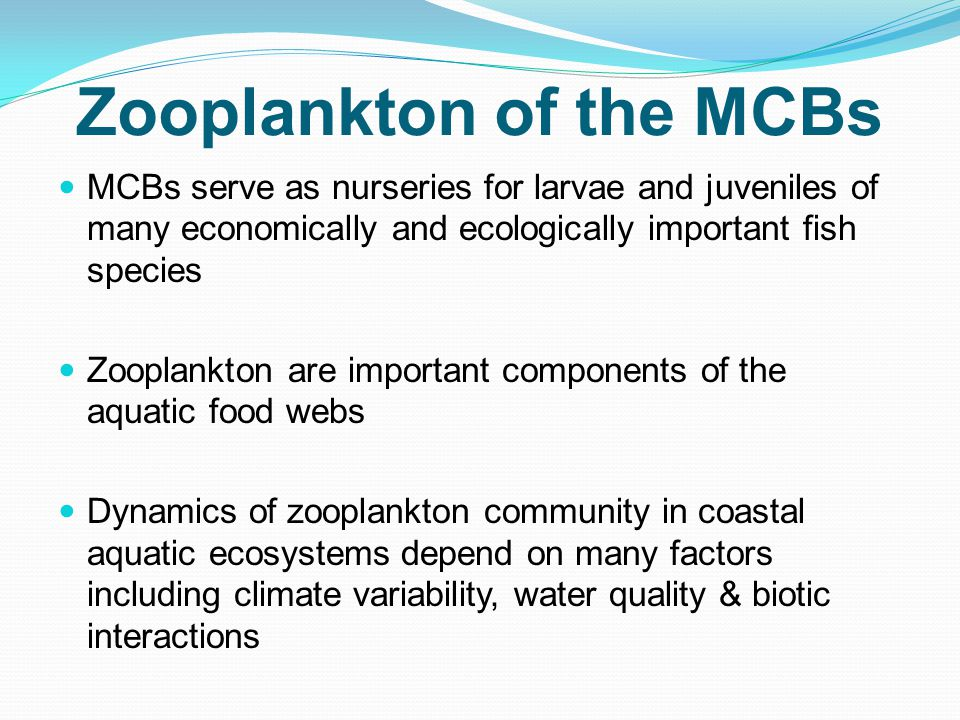 Zooplankton of the MCBs