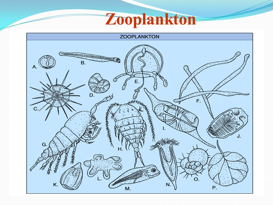 fish and zooplankton relationship tips