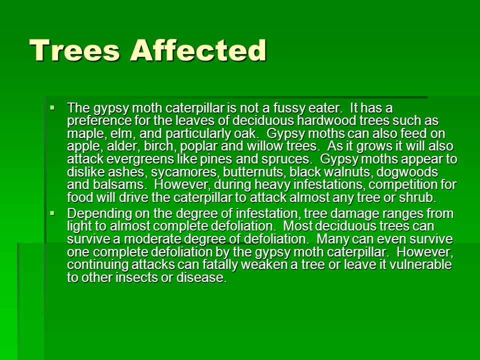 Trees Affected