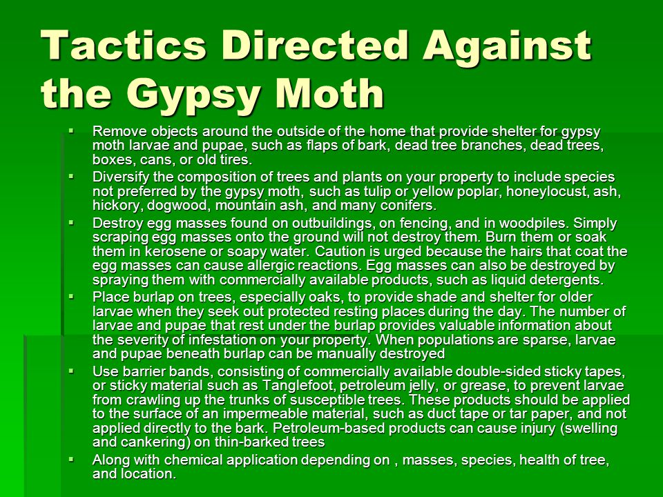 Tactics Directed Against the Gypsy Moth