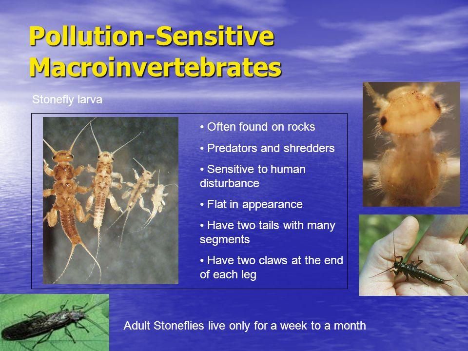 Pollution-Sensitive Macroinvertebrates