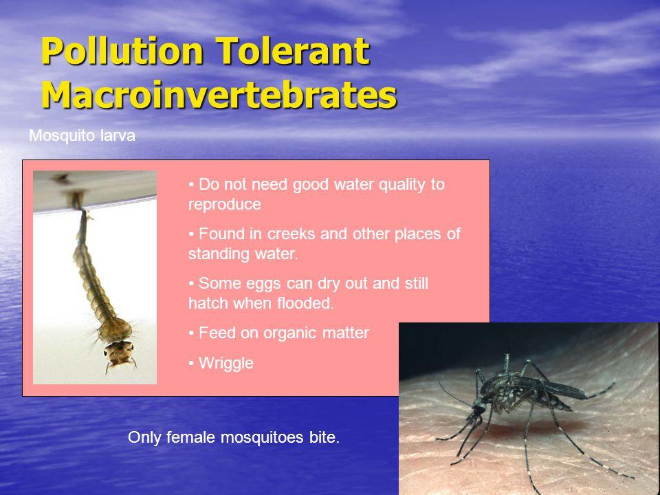 Pollution Tolerant Macroinvertebrates