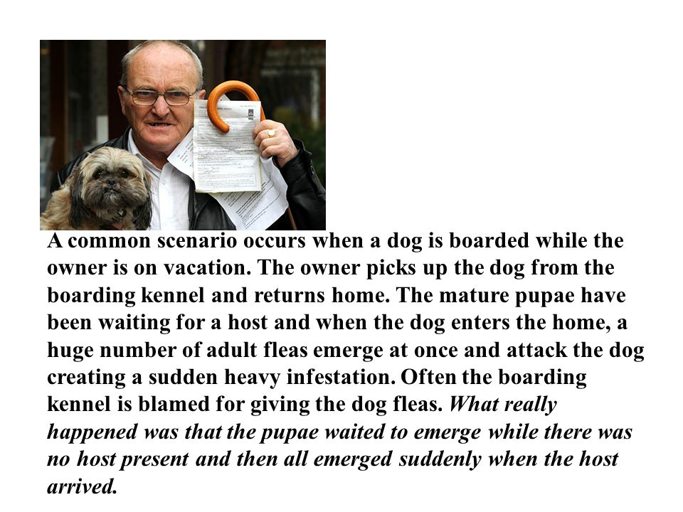 A common scenario occurs when a dog is boarded while the owner is on vacation.