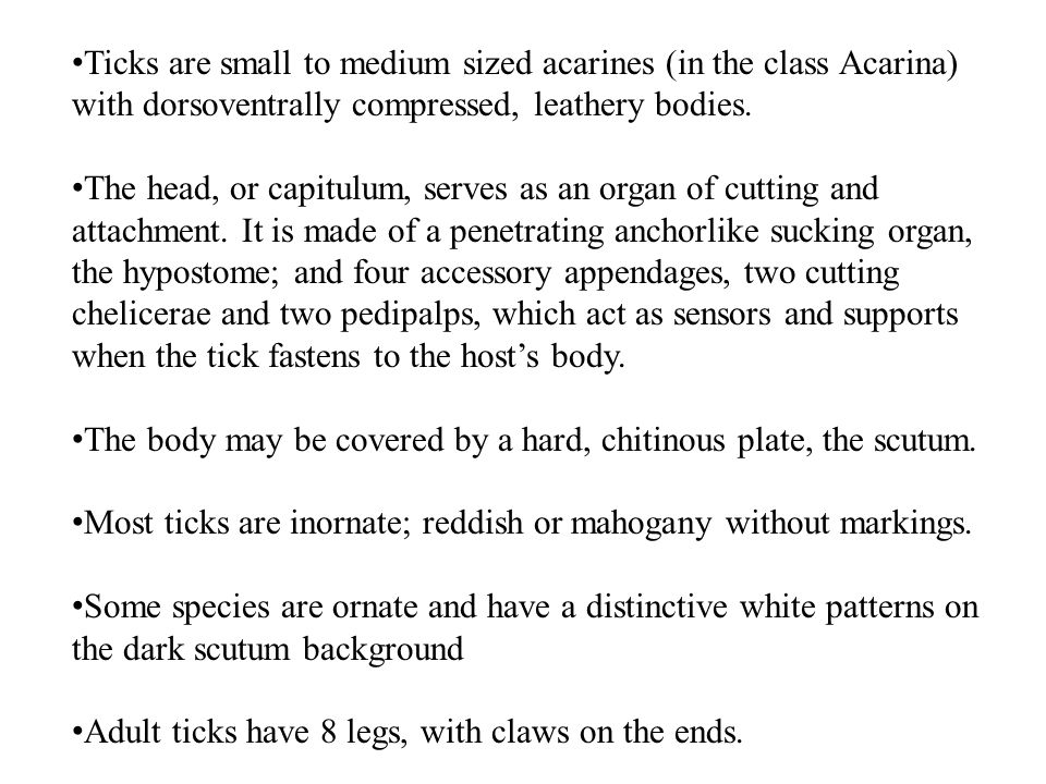 Ticks are small to medium sized acarines (in the class Acarina) with dorsoventrally compressed, leathery bodies.