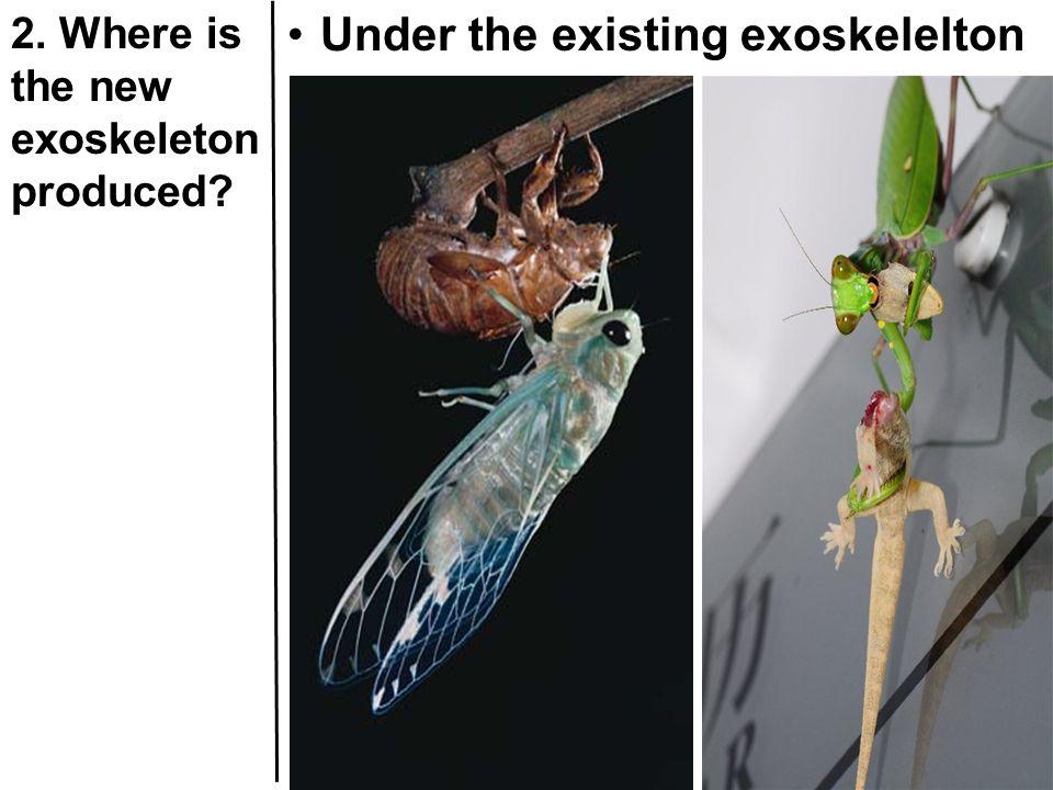 Under the existing exoskelelton