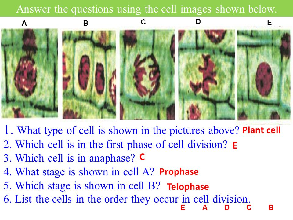 Answer the questions using the cell images shown below.