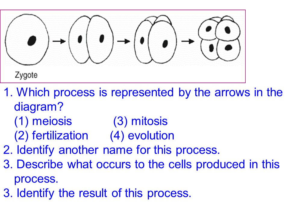 1. Which process is represented by the arrows in the diagram