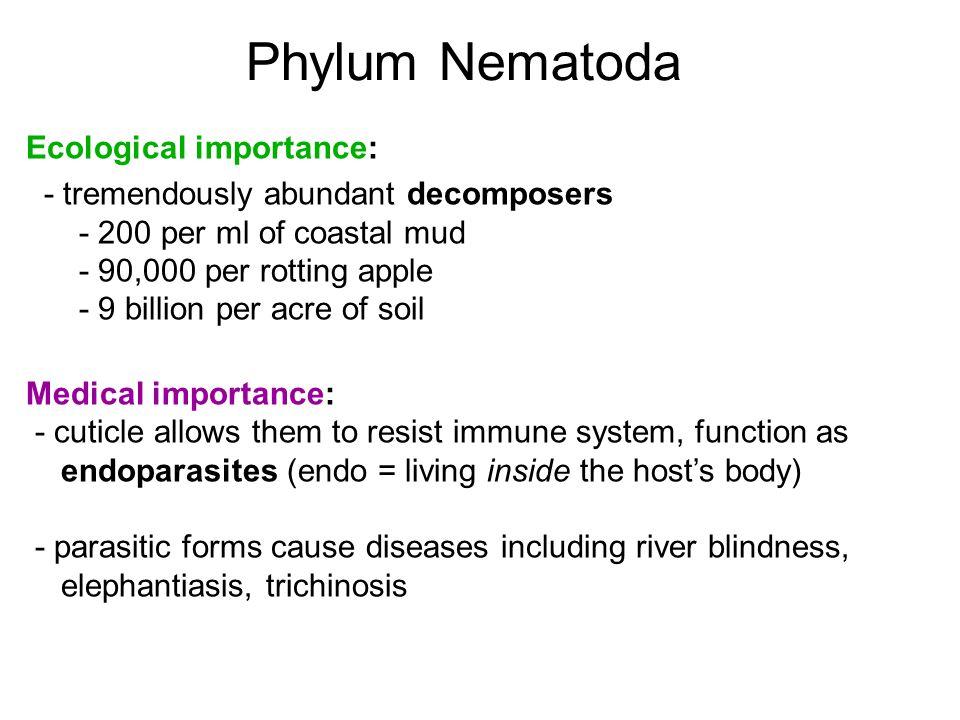 Phylum Nematoda Ecological importance:
