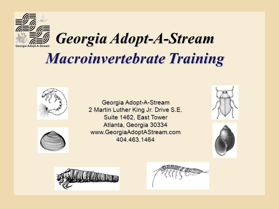 Georgia Adopt-A-Stream Macroinvertebrate Training