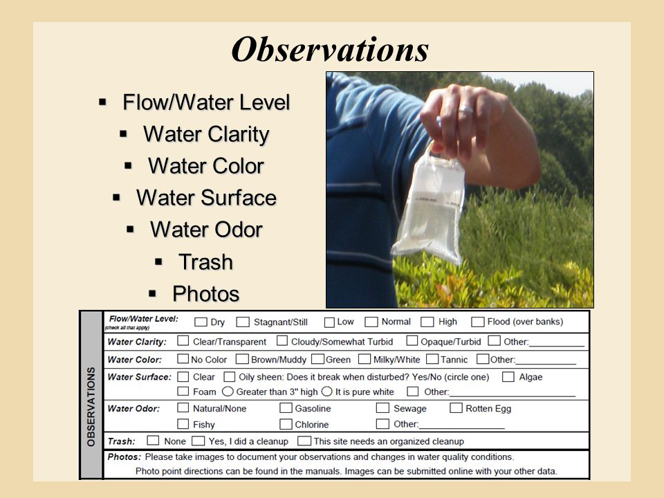 Observations Flow/Water Level Water Clarity Water Color Water Surface