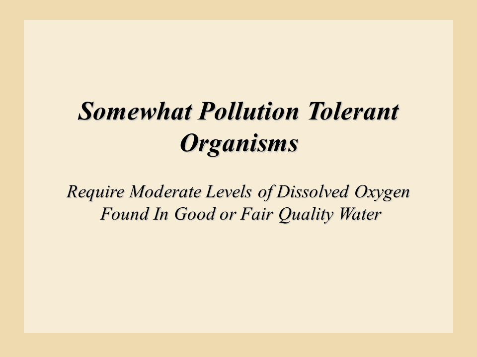 Somewhat Pollution Tolerant Organisms
