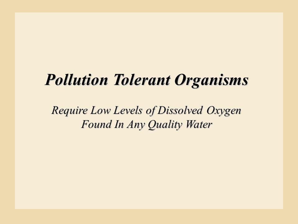 Pollution Tolerant Organisms