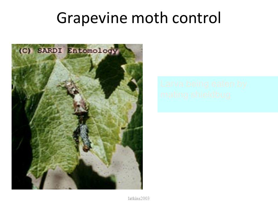 Grapevine moth control