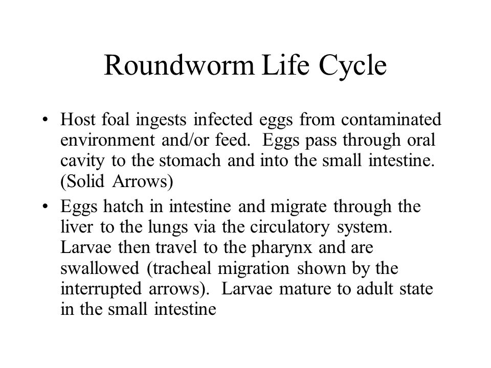 Roundworm Life Cycle