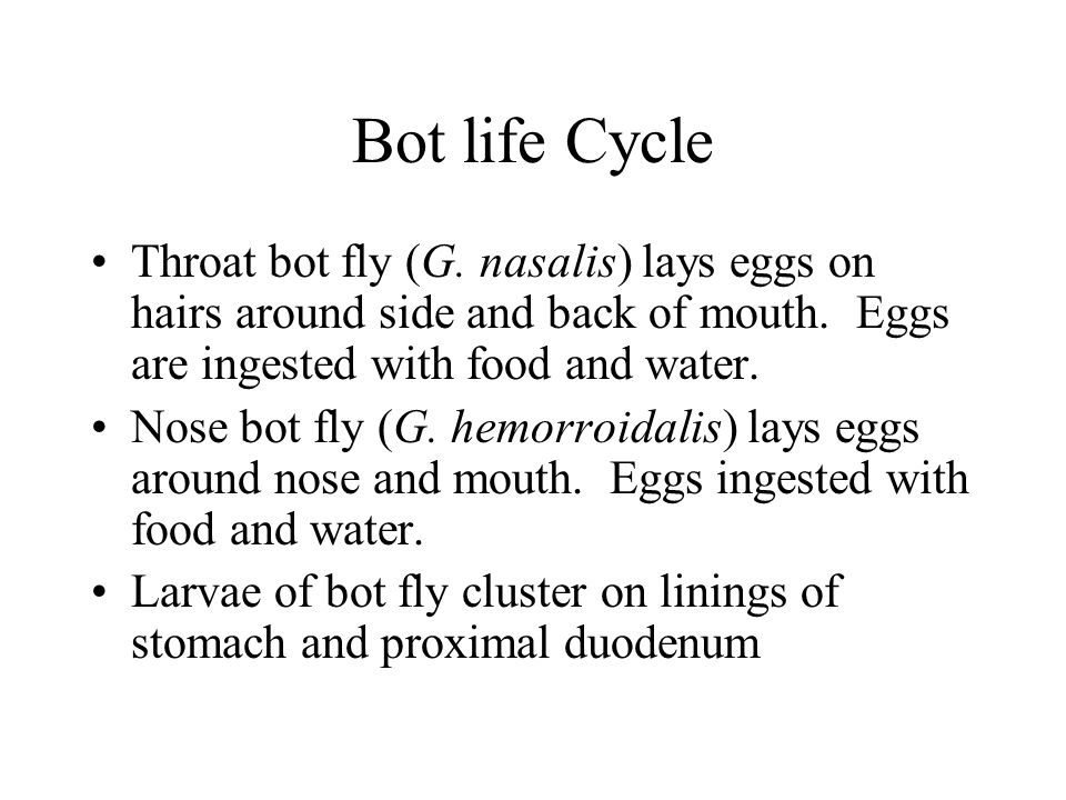 Bot life Cycle Throat bot fly (G. nasalis) lays eggs on hairs around side and back of mouth. Eggs are ingested with food and water.