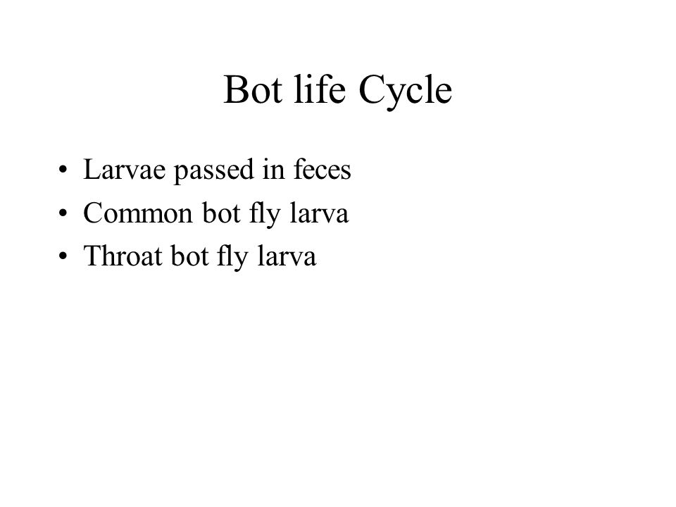 Bot life Cycle Larvae passed in feces Common bot fly larva