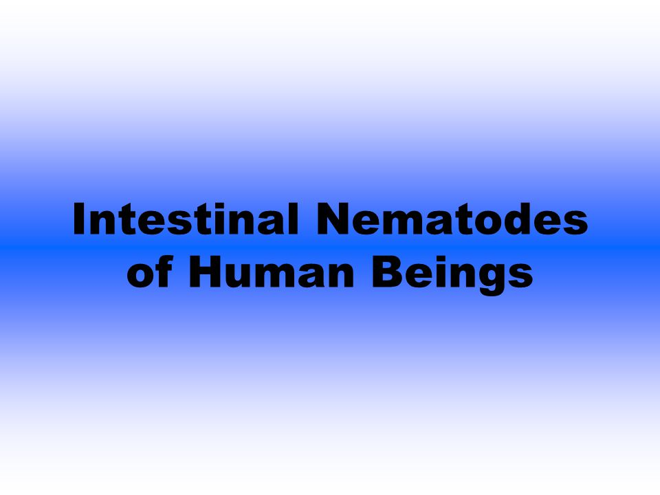 Intestinal Nematodes of Human Beings