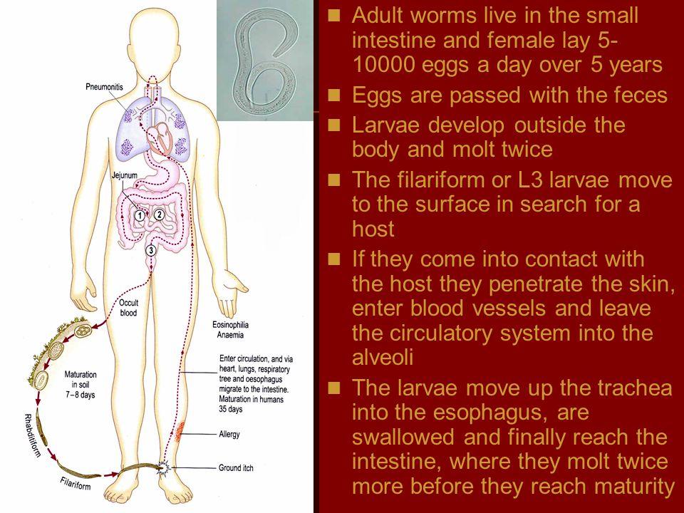 parasite lab by l.wafa menawi
