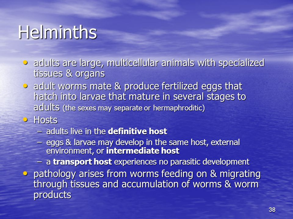 Helminths adults are large, multicellular animals with specialized tissues & organs.