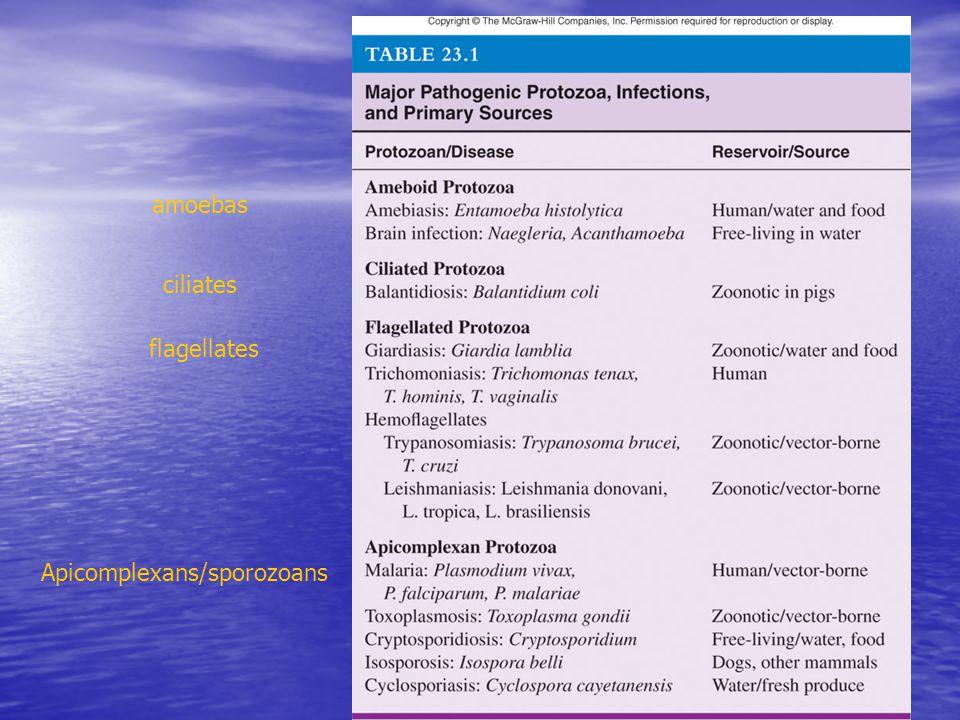 Apicomplexans/sporozoans