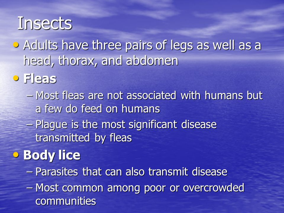 Insects Adults have three pairs of legs as well as a head, thorax, and abdomen. Fleas.