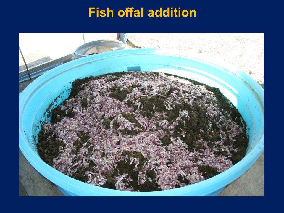 Fish offal addition