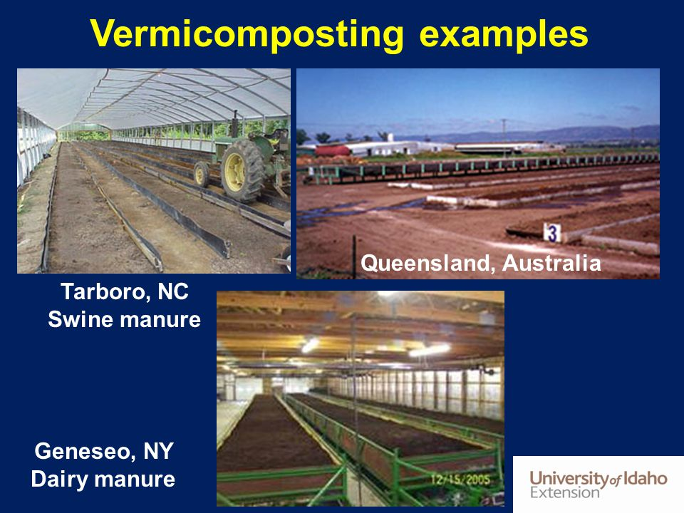 Vermicomposting examples